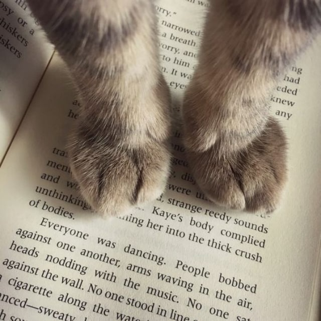 Прикольные, смешной рисунок книга